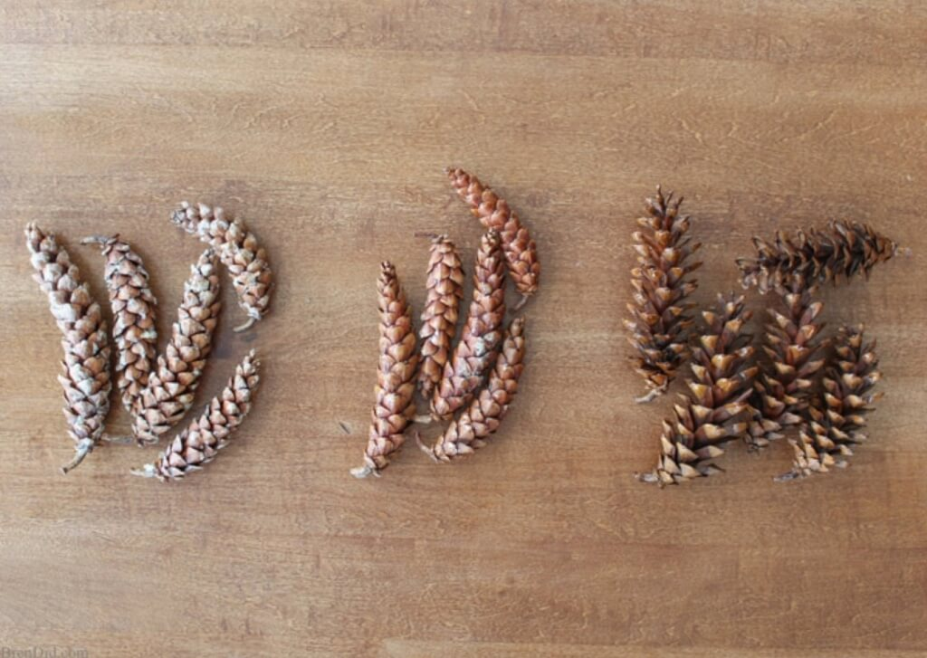 christmas pine cone crafts-how to prepare fresh pine cones for crafts